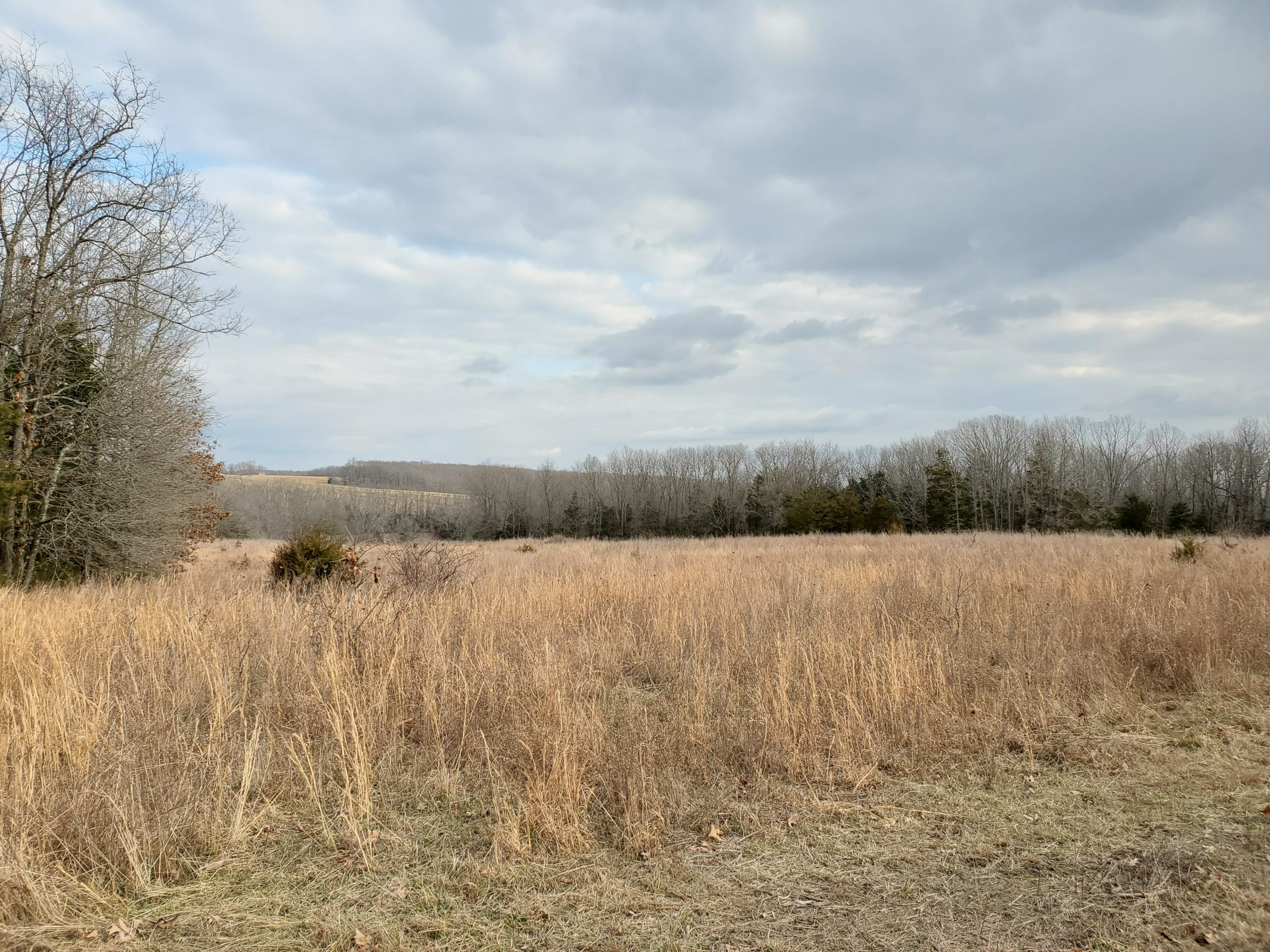 Cattle and Hunting Farm for Sale Wright County