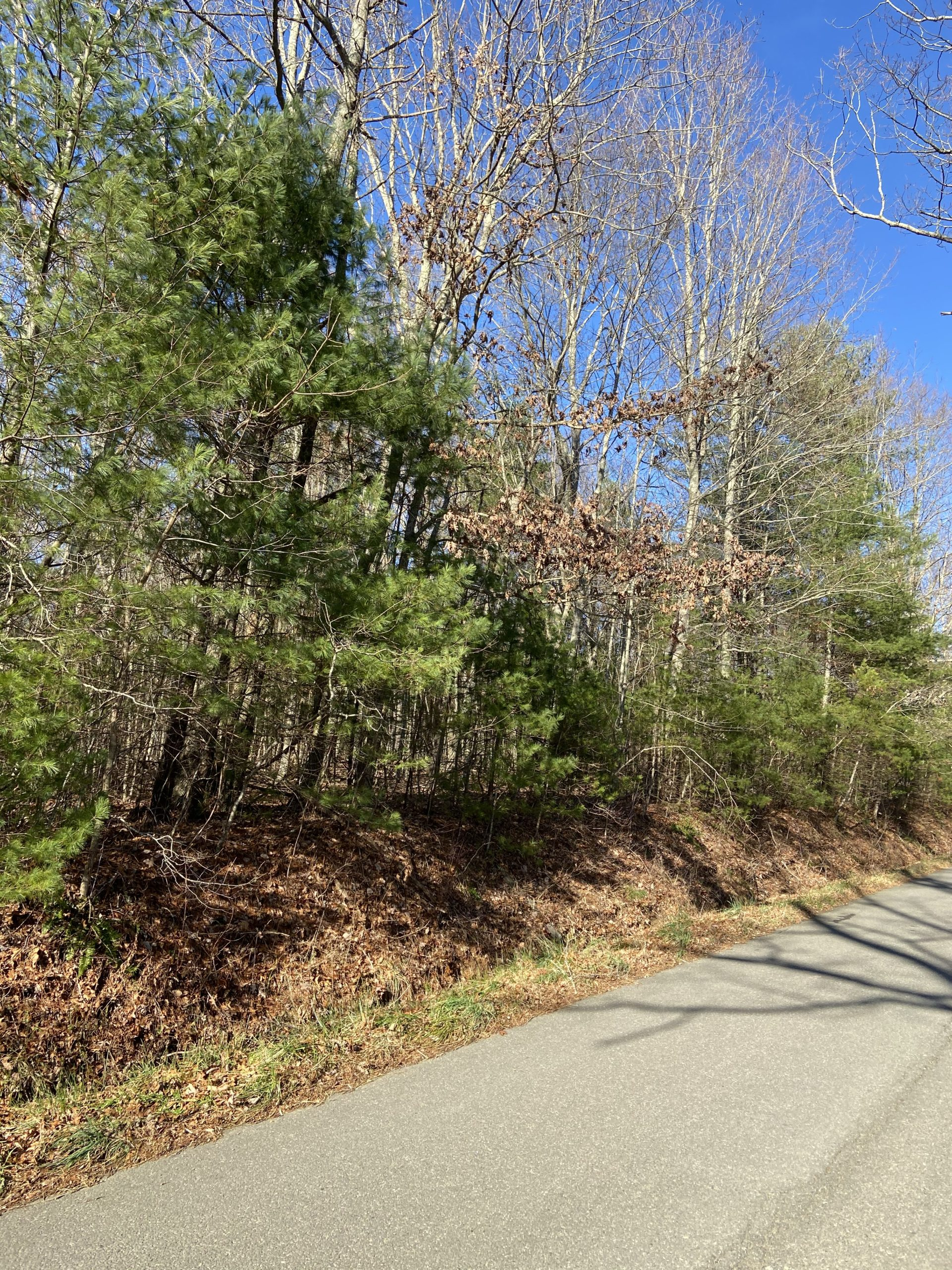 Wooded Lot for Sale in Willis VA