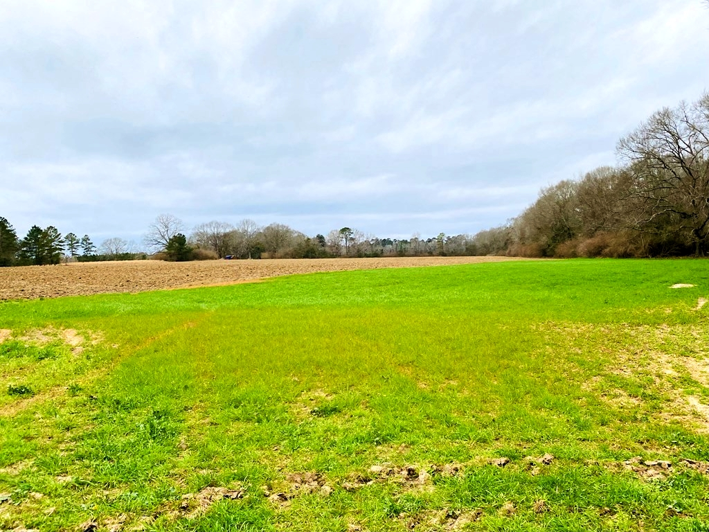 203 Acres Turnkey Hunting Land for Sale Amite County, MS