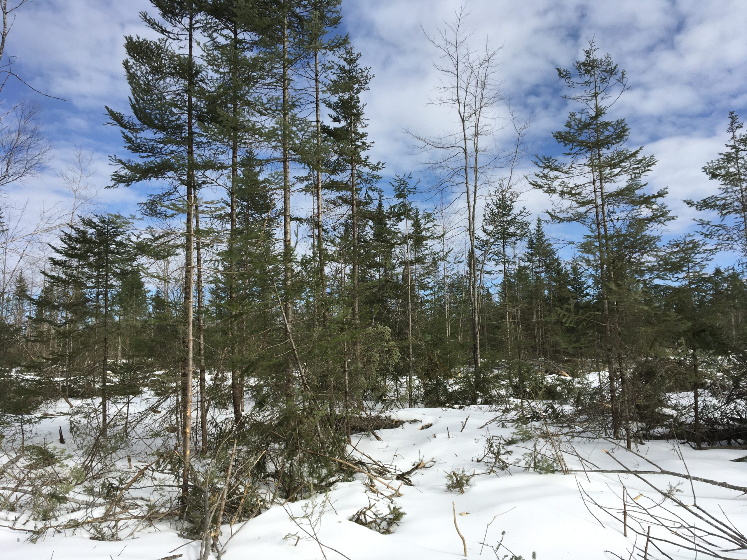 Land for Homesteading-Hunting-Hideaway