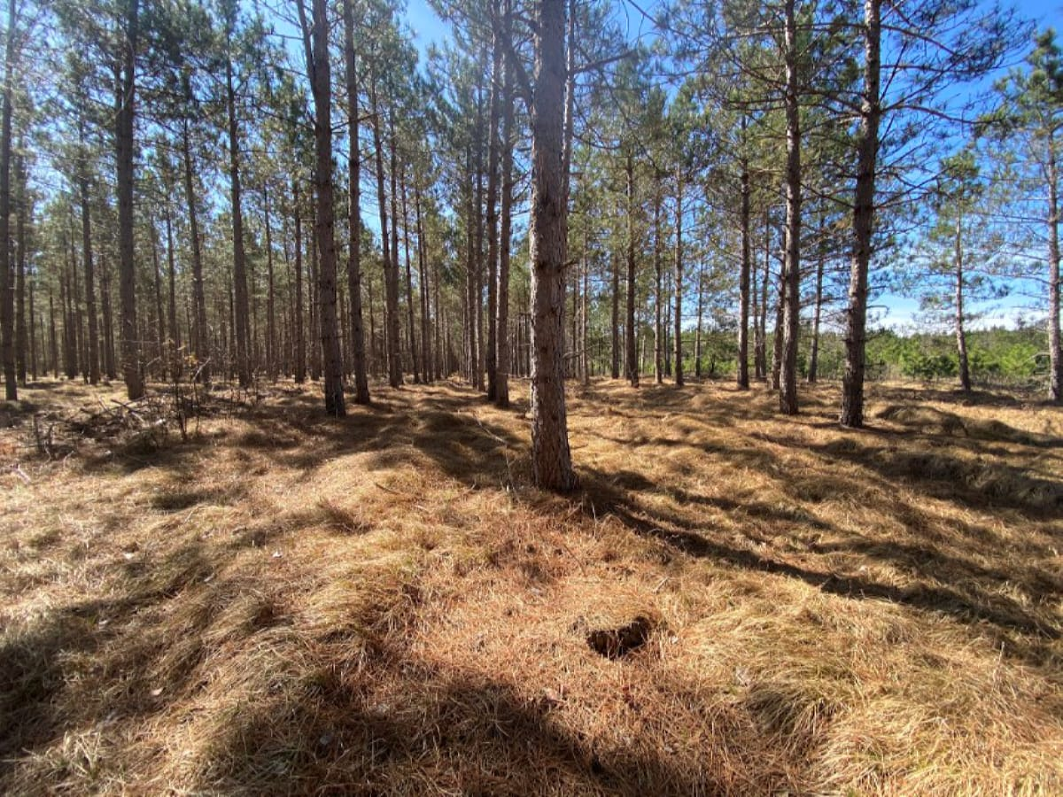 Town of Rome 60 acre timber lot for sale in Adams County WI