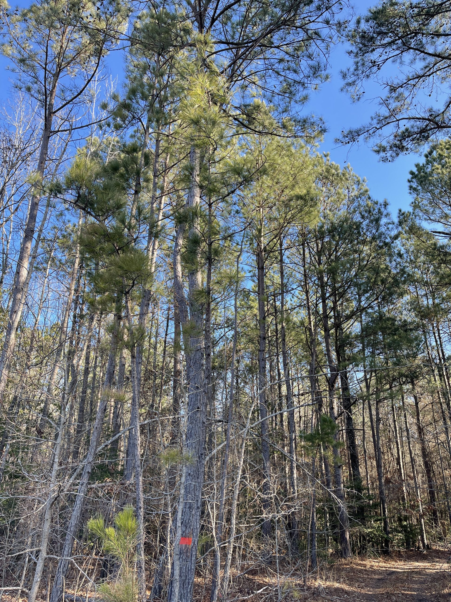 Great Hunting and Timberland Property Close to Malvern and within One Hour of Little Rock.