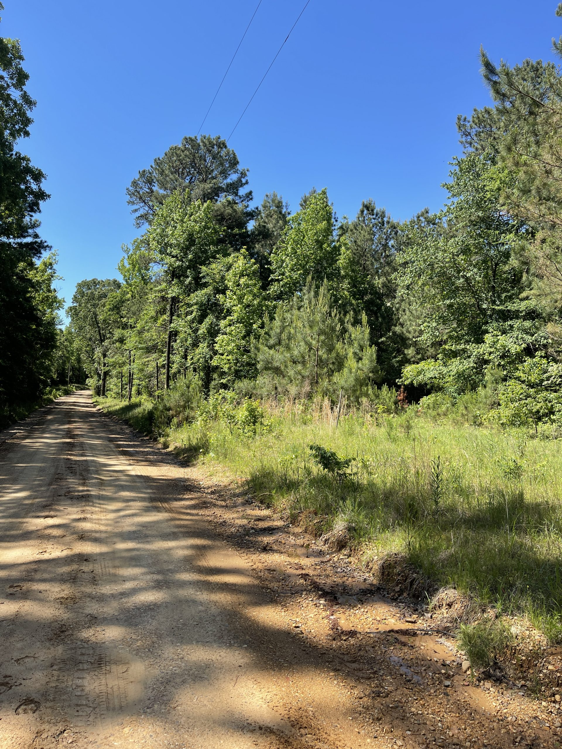 Hunting Land for sale in Dallas County Arkansas