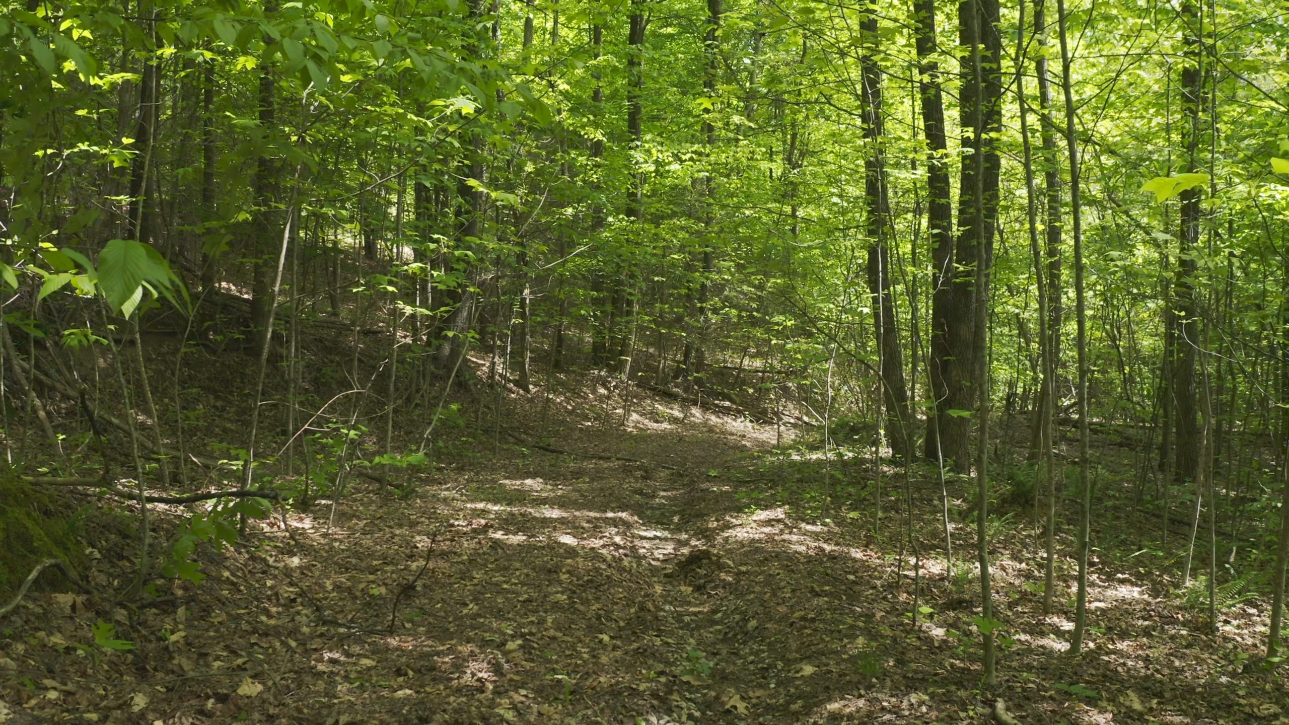 East Tennessee Unrestricted Wooded Land For Sale