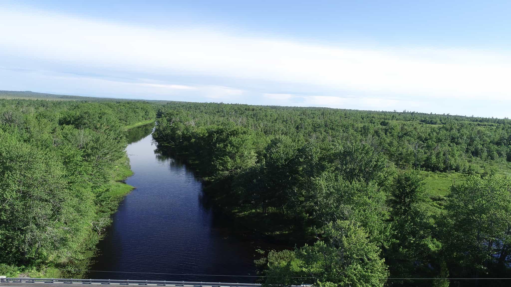 Birch Stream Forest