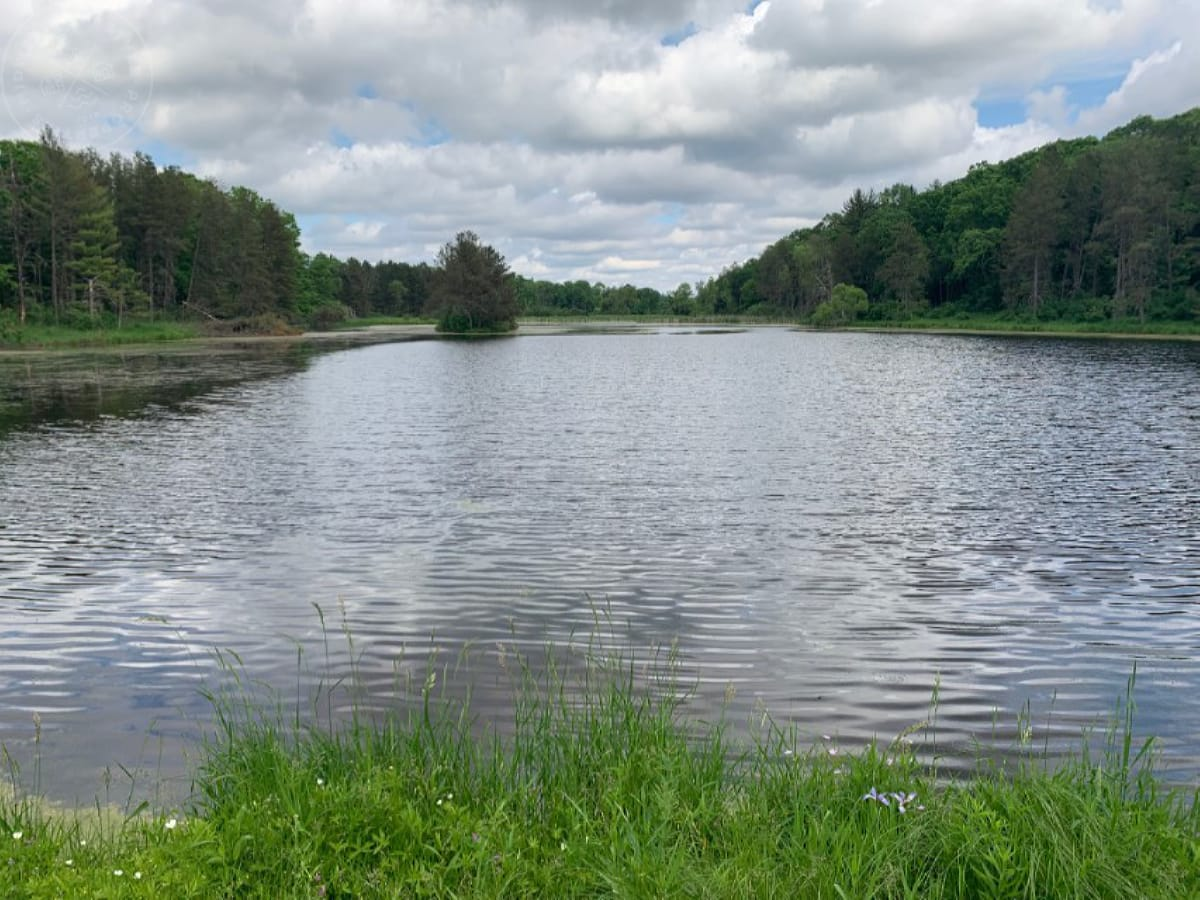 40 acre parcel building site, great hunting, fishing and recreational
