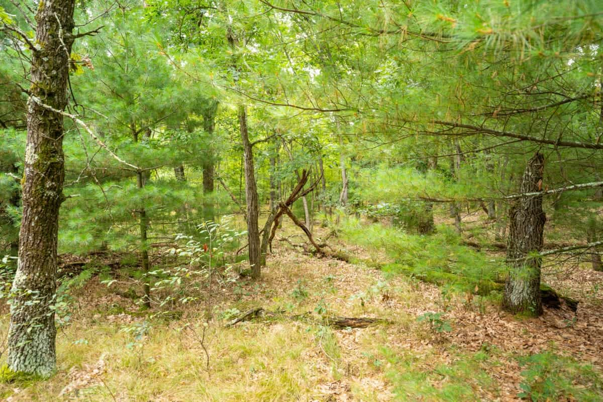 Recreational/Hunting Property, Juneau County, WI
