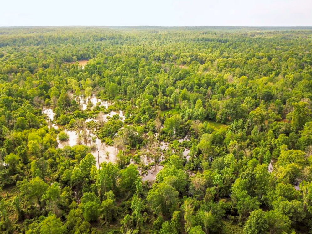 Land for Sale on the Big Black River Claiborne County MS