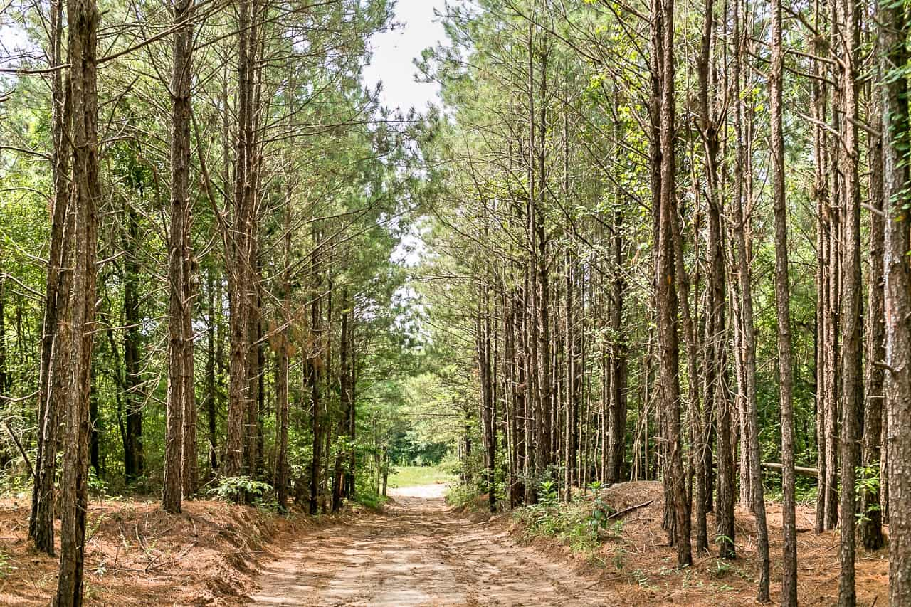 170 Acres Timber Recreational Hunting Land for Sale North LA