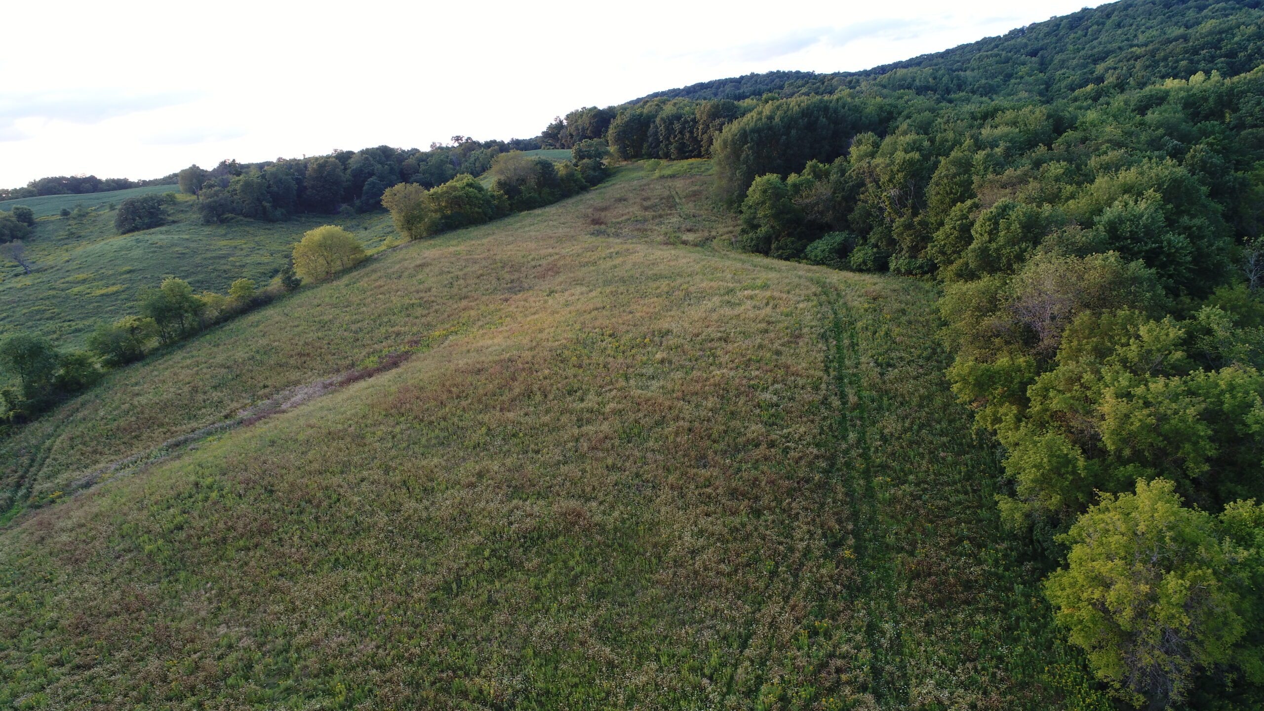 19.46 Acres Northeast of Elroy in Juneau County