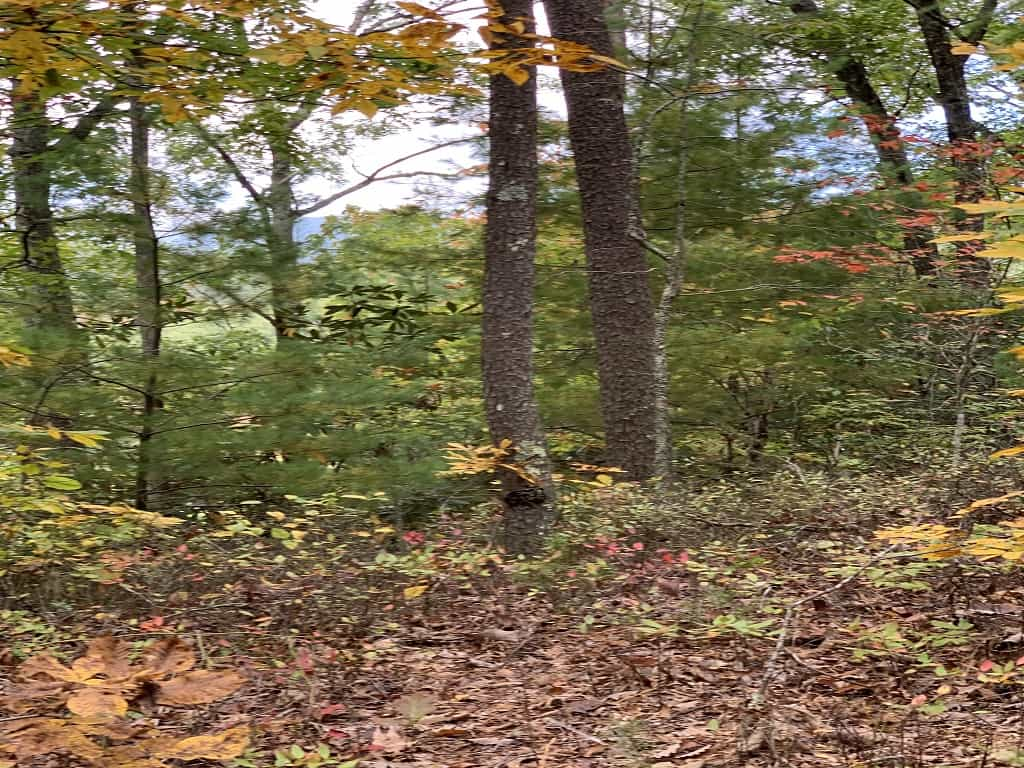 Unrestricted Land For Sale Sevier County Tennessee