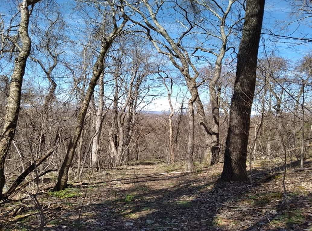 Unrestricted Wooded Property for Sale Grainger County Tennessee