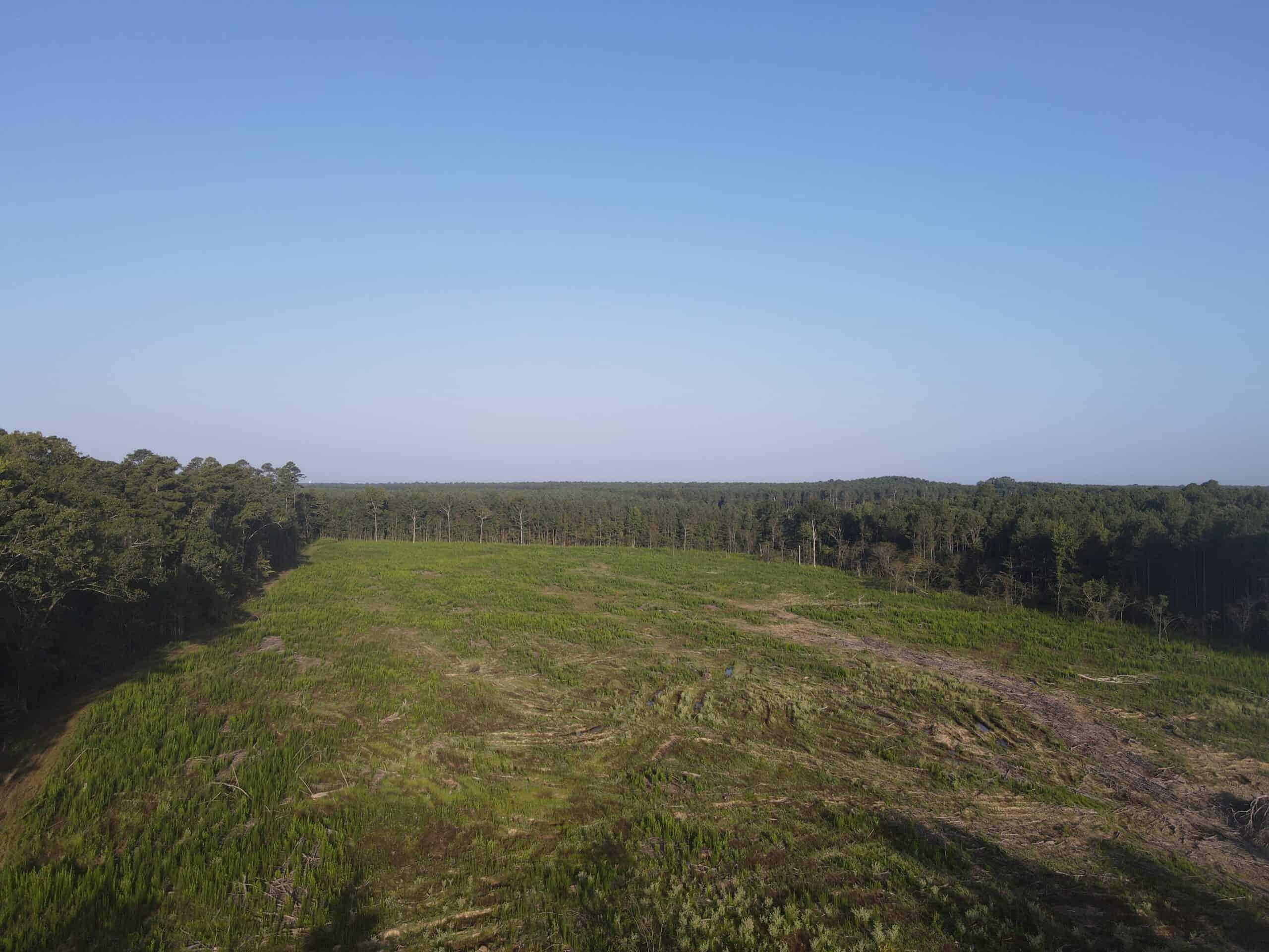 Timberlandfor sale near SheridanArkansas
