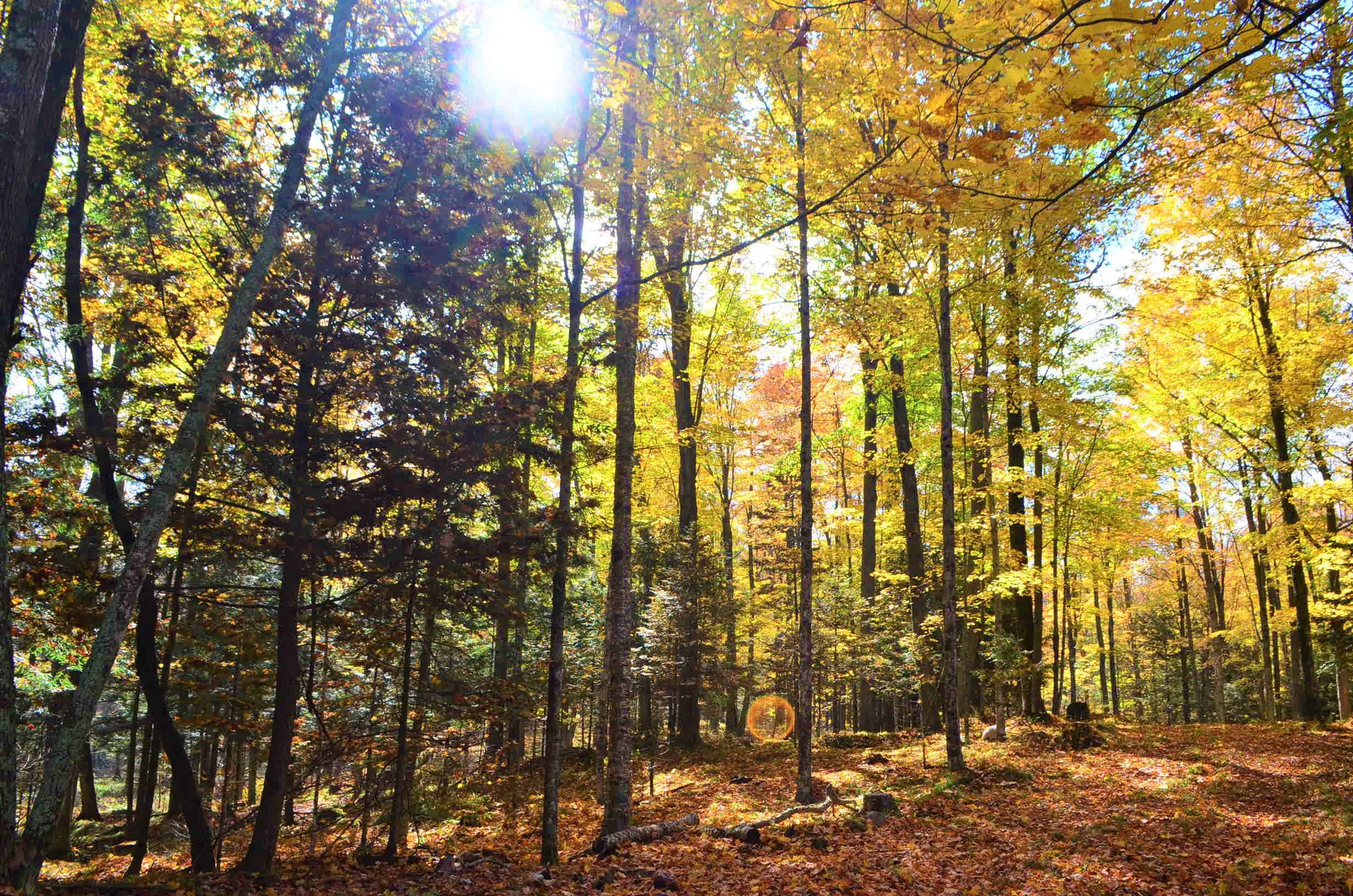 Quality hunting parcel located in western Shawano County